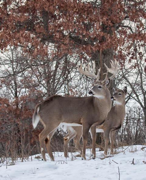Deer Hunting in Oneida NY