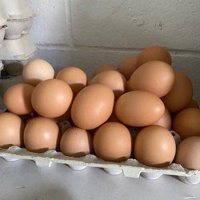 Chiropractic Oneida NY Chickens Eggs